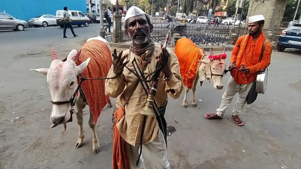 Gugububuwala Shankar Gaikwad with nephew Rajesh Pawar and their cows