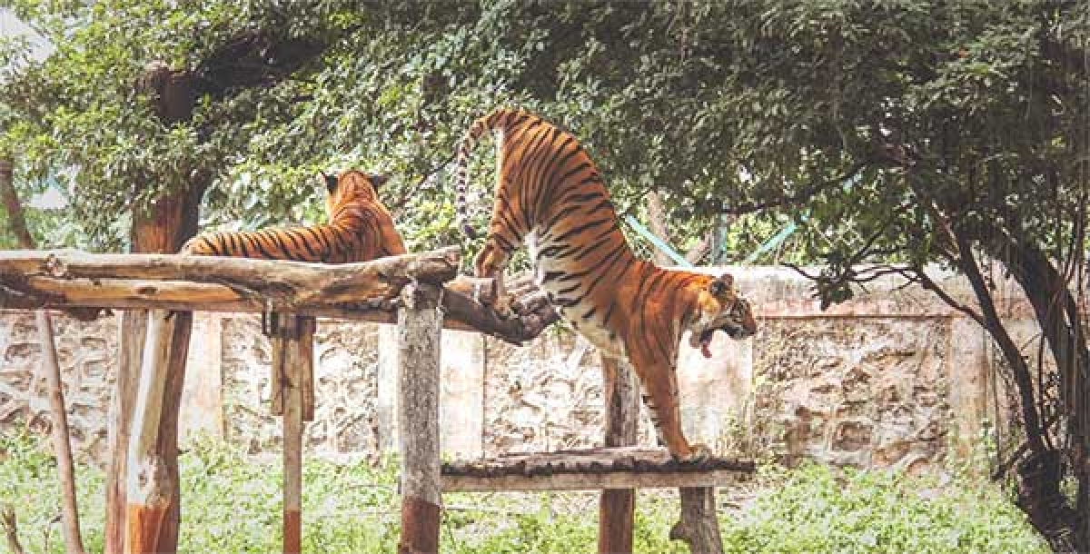 Fearing cyclone Tauktae, Byculla Zoo animals moved to night shelters