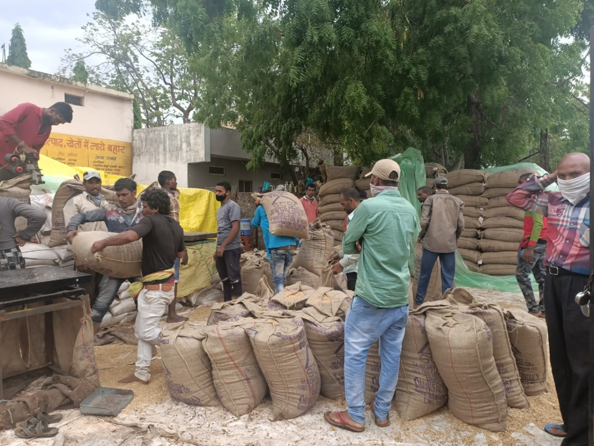 Wheat purchase started in Sardarpur on Tuesday