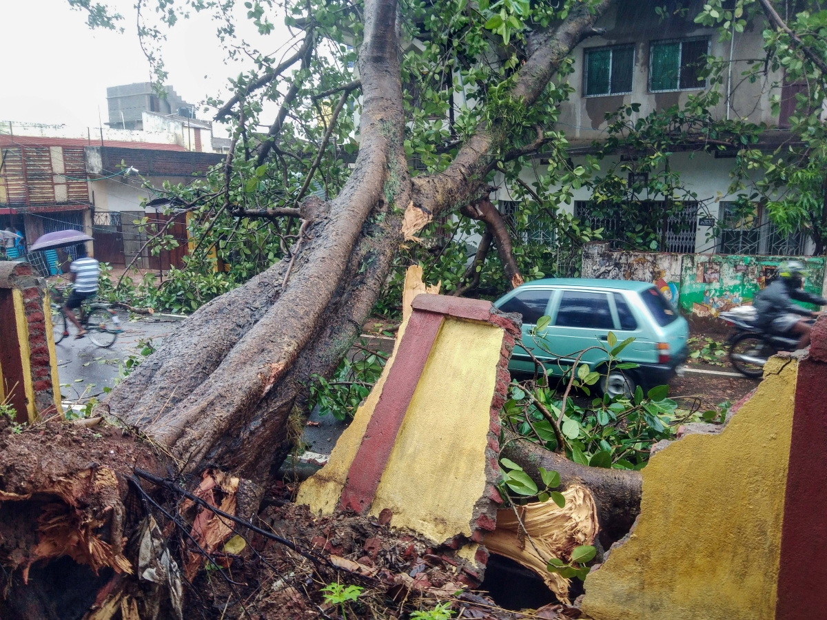 A tree uprooted and fell on a residential house that collapsed the wall during the landfall of cyclone Yaas, in Khunti district, May 27, 2021.
