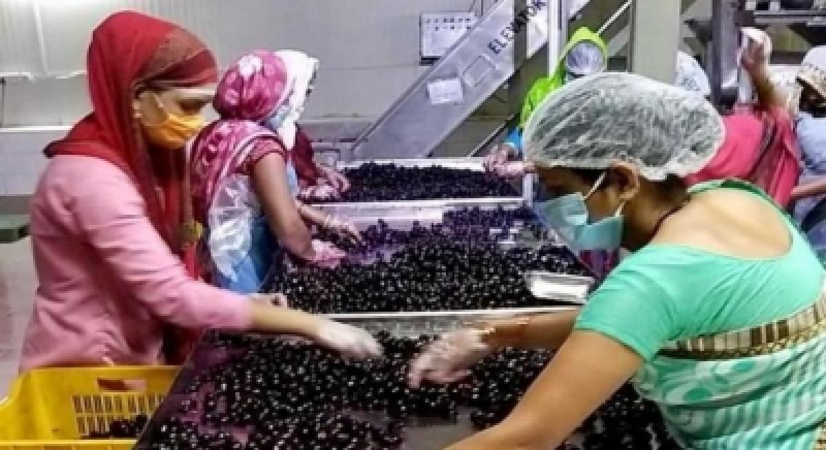 Madhya Pradesh connect: Widening the market for jamun agroforestry