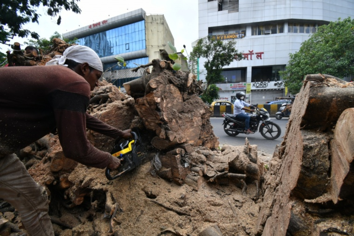 Works carried out to  cut out a tree that fell off the road in Dadar