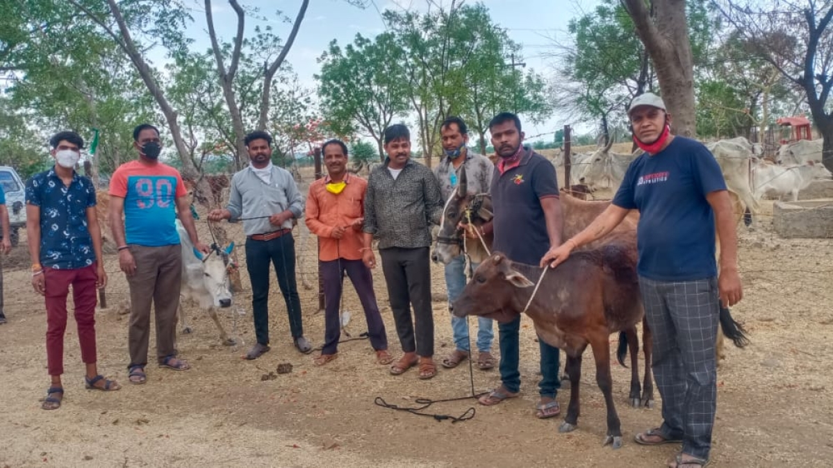 Team with rescued cows
