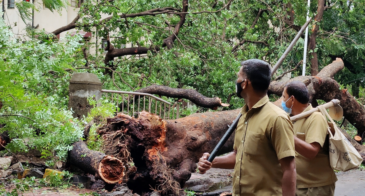 Cyclone Tauktae: Corporators and resident groups clear uprooted trees on their own