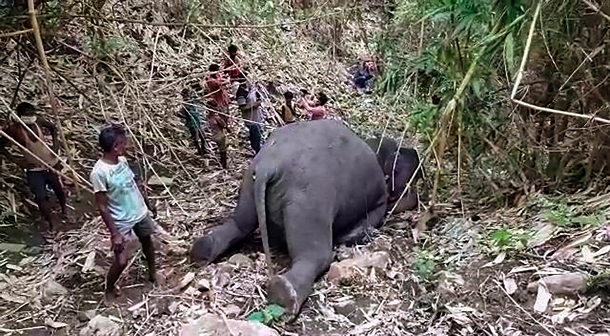 An elephant who after being stuck by lightening near Bamuni Hills in Kondoli, Nagaon district, on Thursday.