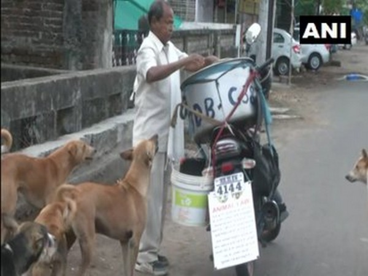 COVID-19: Nagpur man feeding 190 stray dogs with chicken biryani since beginning of pandemic