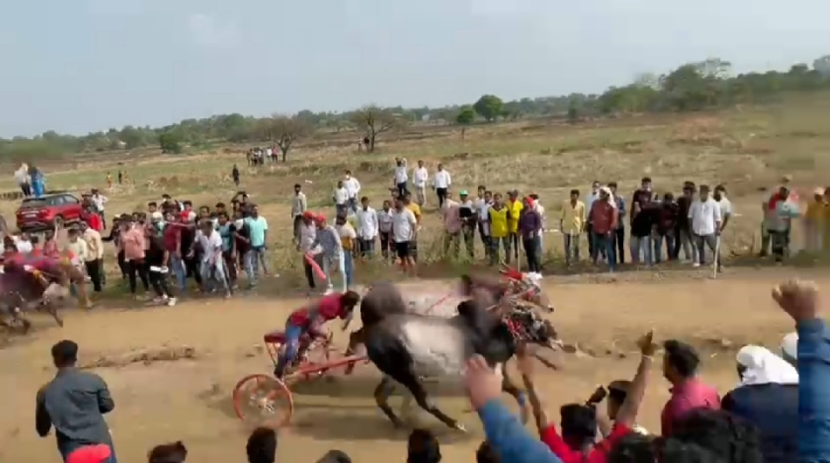 Thane: 60 booked for organising bullock cart race in Kalyan; see pics from event