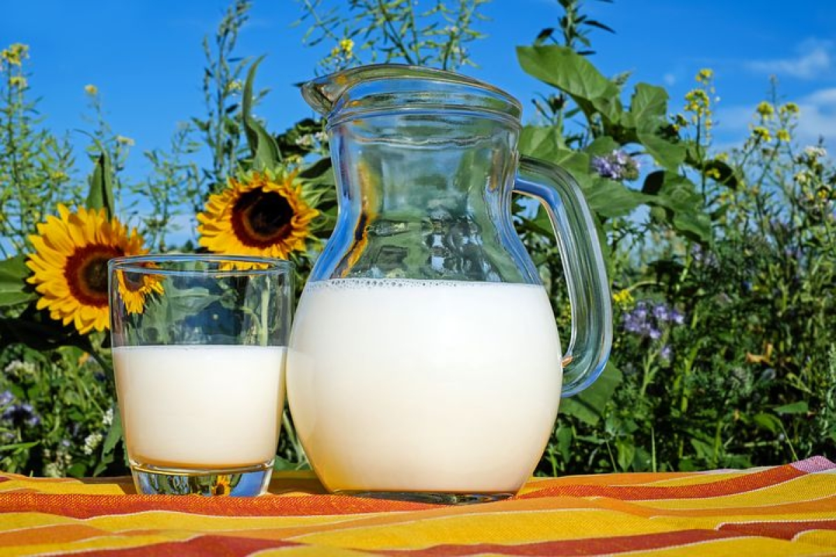 Measures are being taken to address constraints faced by dairy exporters: Official