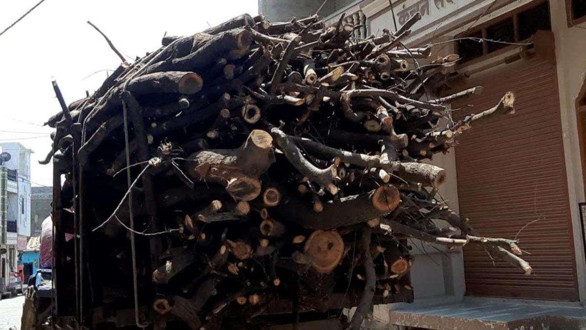 Madhya Pradesh: Wood mafia rules the roost in Alot
