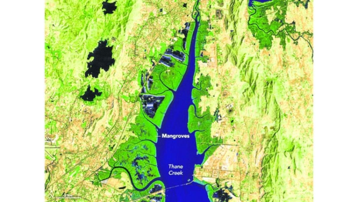 Mumbai: Mumbai coastline and Thane creek at risk due to reclamation: Vanashakti