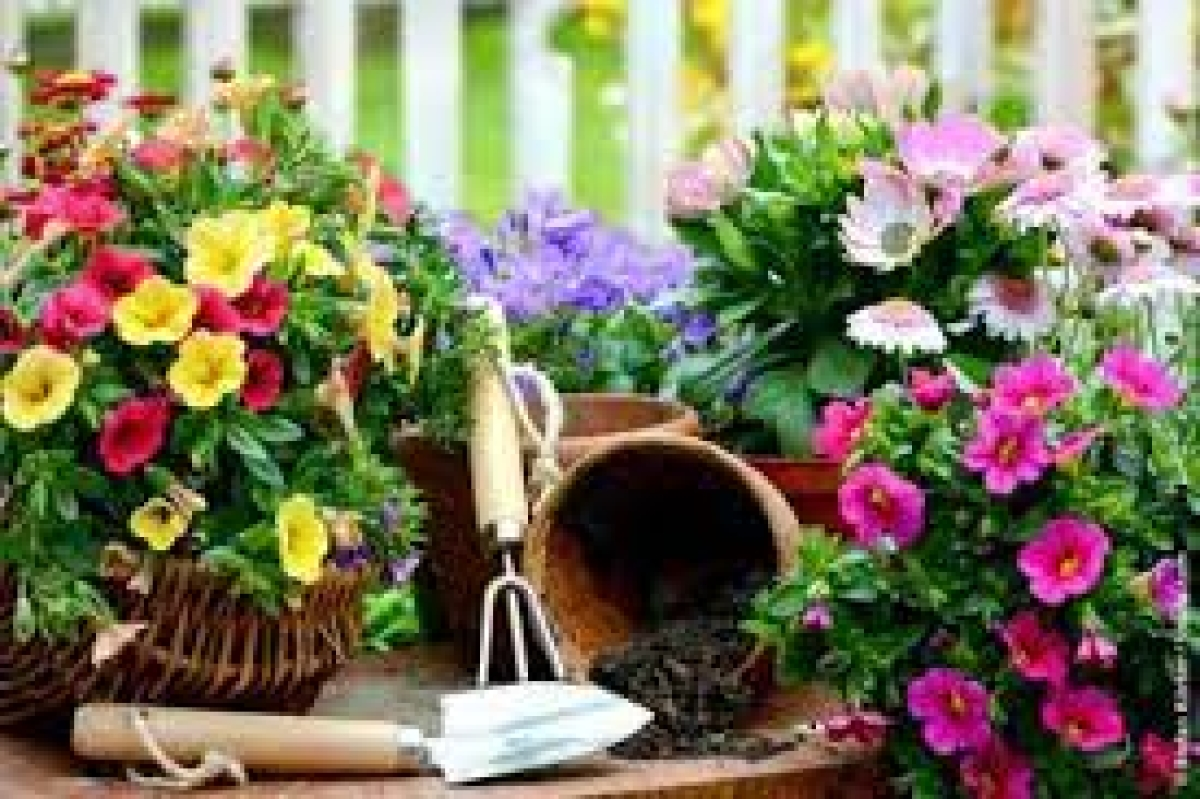 Spending time with indoor plants works wonders to alleviate both mental and physical stress in people of all ages