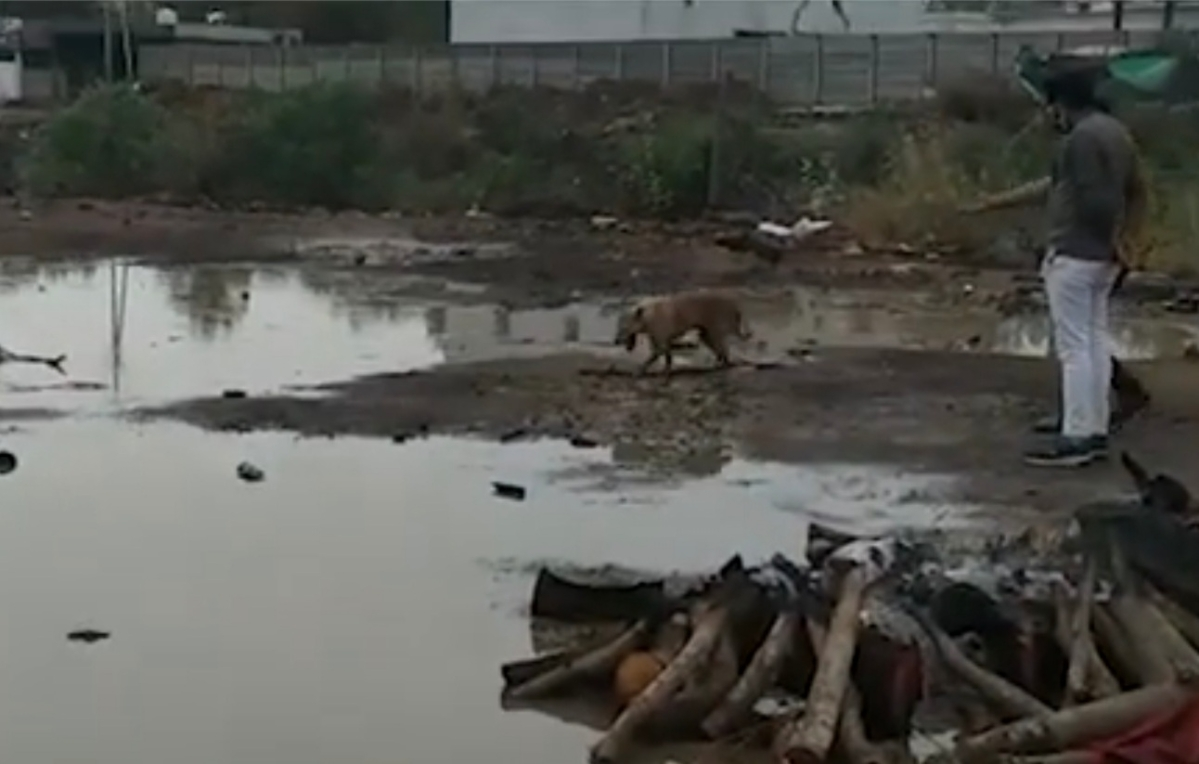 Neemuch: Rain douses pyres, stray dogs feed on half-burnt Covid bodies