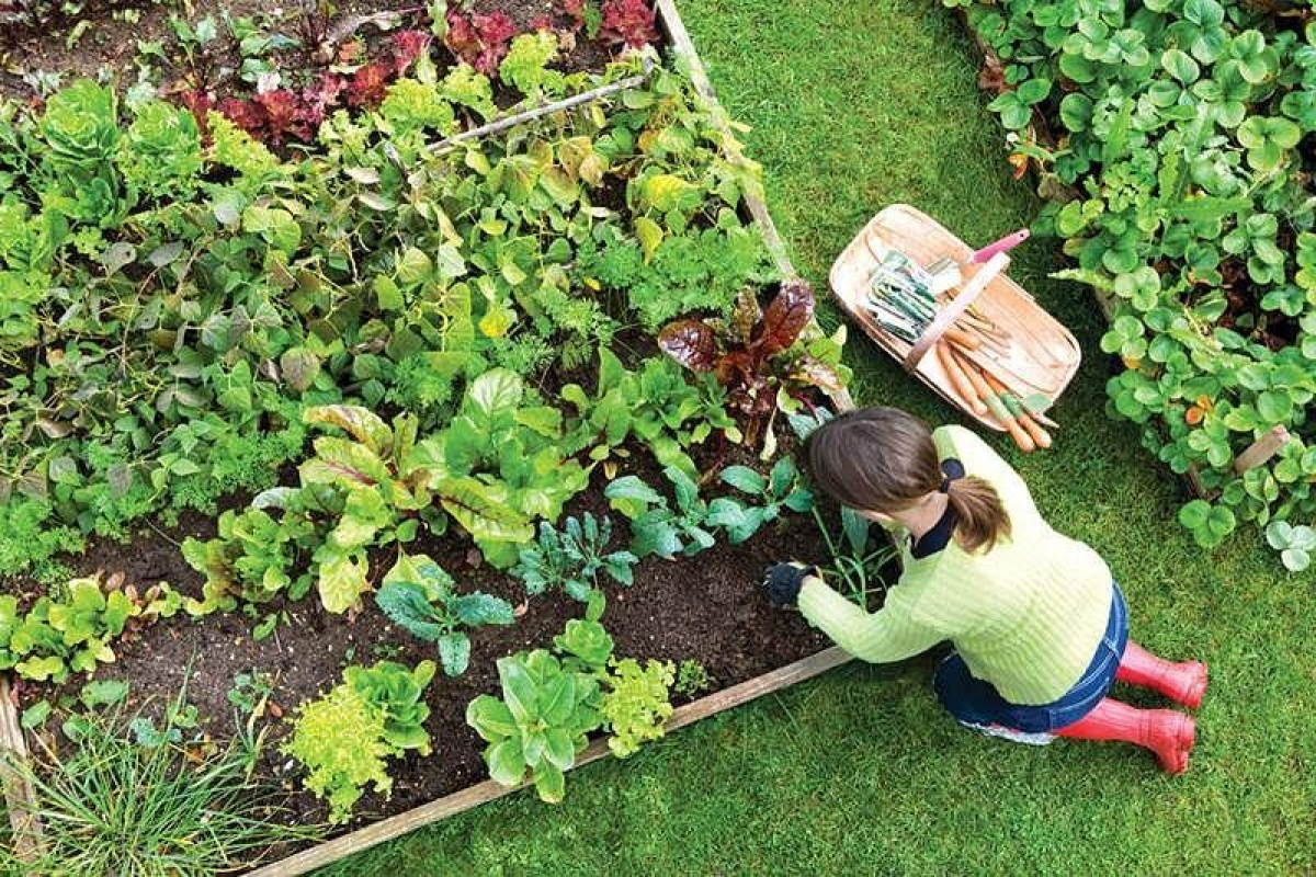 Gardening or 'green care' stimulates our bodies' natural development of happy chemicals, which may help keep depression and anxiety at bay