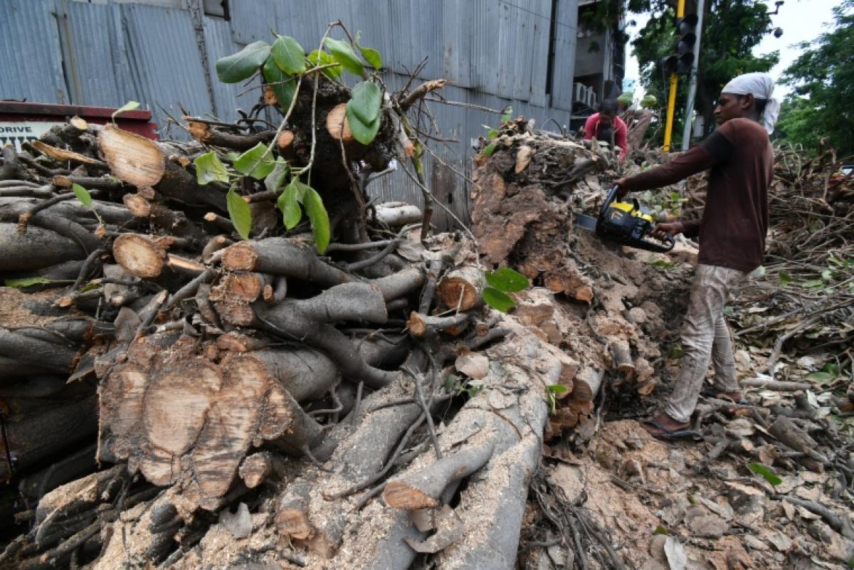 In pics: A look at situation in Mumbai post Cyclone Tauktae; BJP's Ashish Shelar meets fishermen