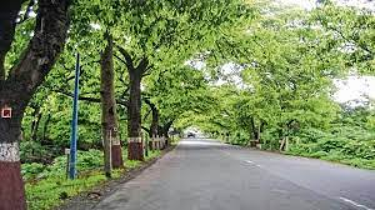 Bhopal: Madhya Pradesh government launches scheme to award people for planting trees during monsoon