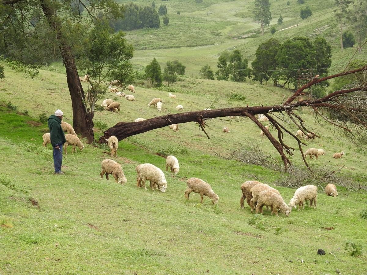 Mannavanur sheep farm