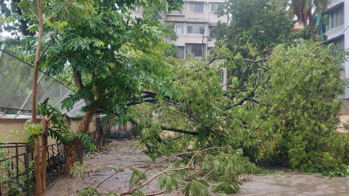Tree falls in a residential area in Vile Parle, Mumbai due to strong wind caused by Cyclone Tauktae on May 17, 2021.