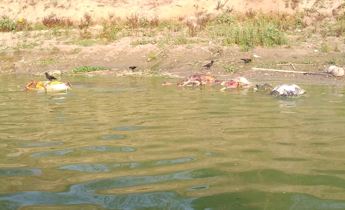 Bodies wash up on Ganga ghats in Bihar's Buxar - the story so far