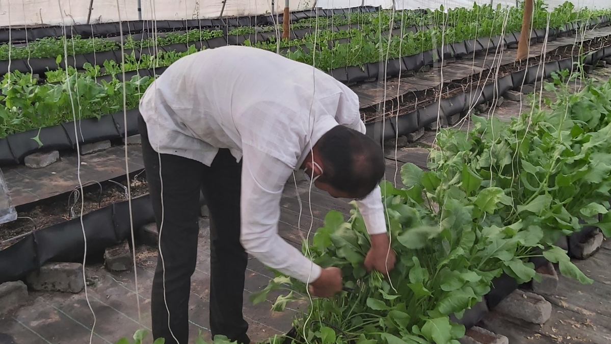 The Hungry Happy Hippy: Traversing through the world of hydroponic farming
