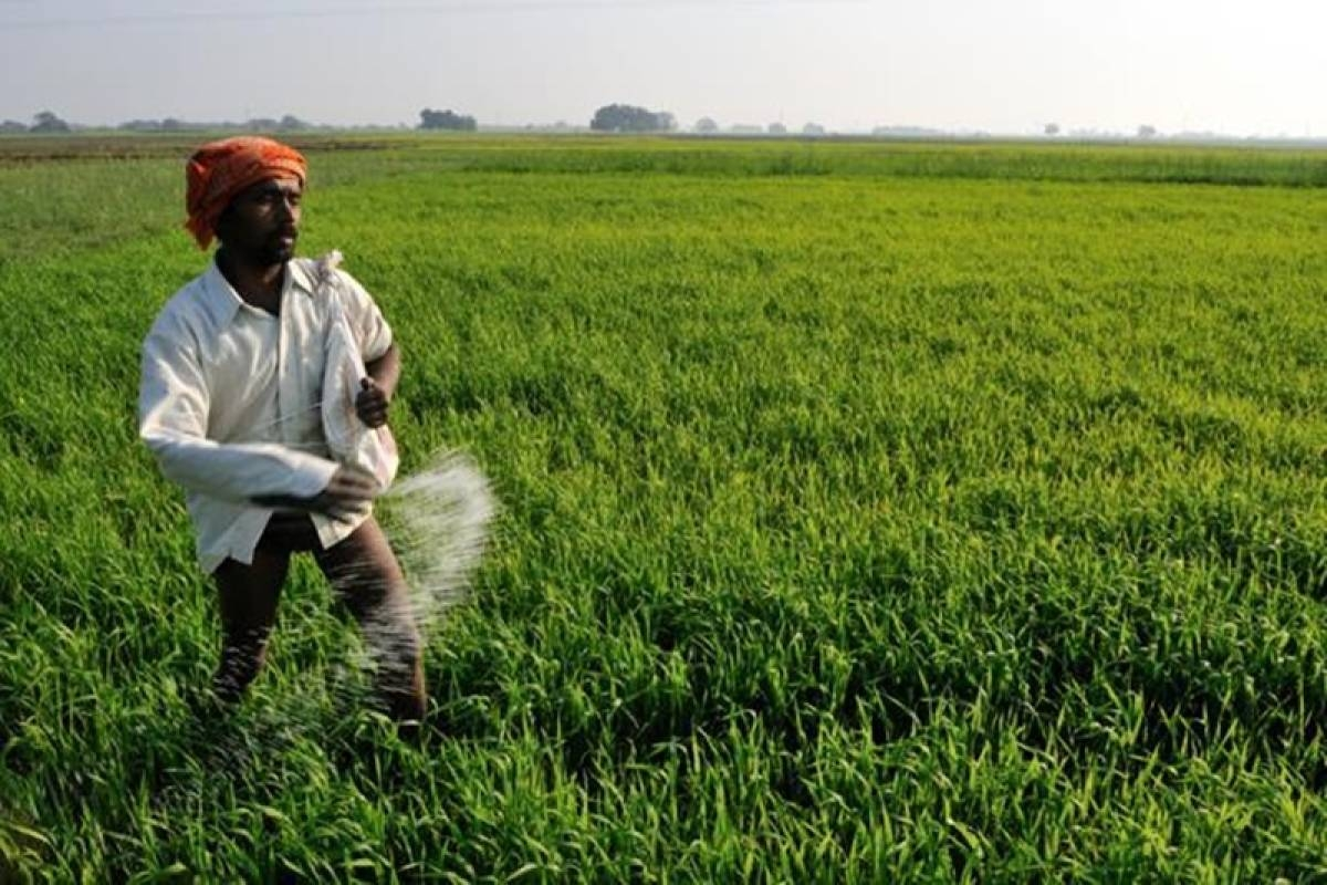 Bhopal: Fertiliser rates increased from Rs 1200 to Rs 1900 for 50kg sack, farmers say it is shocking