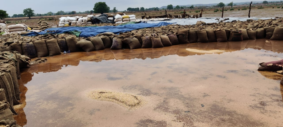Gunny bags filled with wheat inundated with rain water at a government wheat procurement facility in Satna district on Wednesday. The shoddy state of affairs was exposed in the unseasonal rains caused by Cyclone Tauktae.
