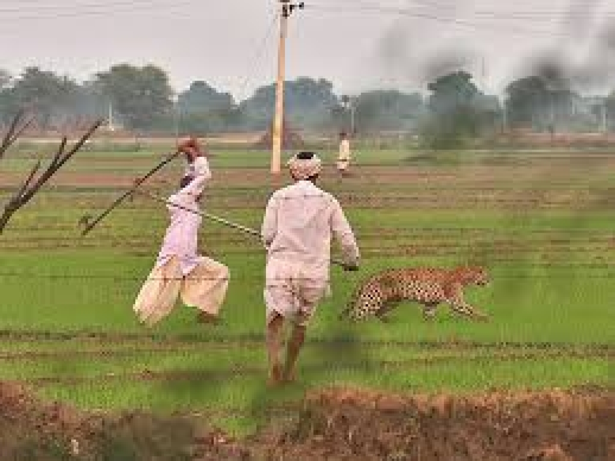 Indore: Man-animal conflict on rise in forest areas, cause panic among villagers