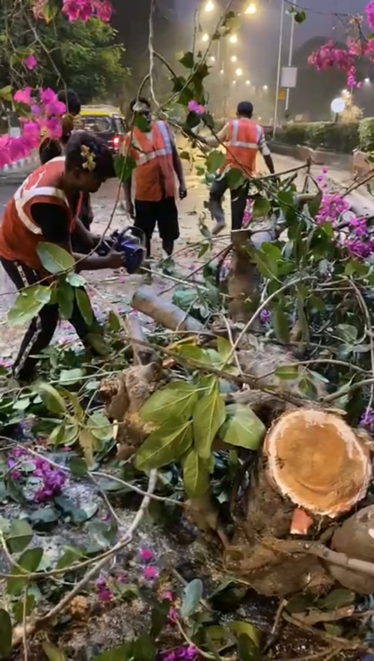 Mumbai: BMC to float tenders for contractors to prune, maintain trees