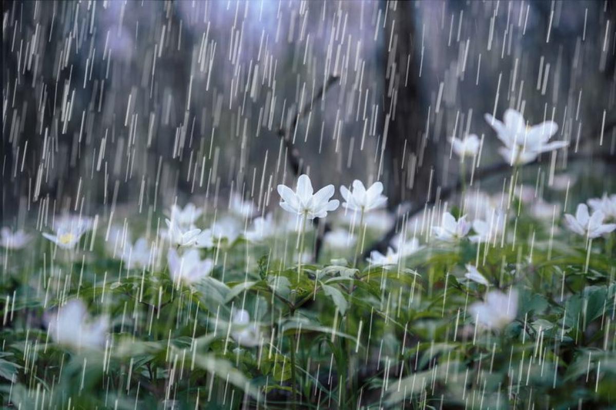 Bhopal: Southwest monsoon advances further into north Arabian Sea, Gujarat, Madhya Pradesh, Chhattisgarh