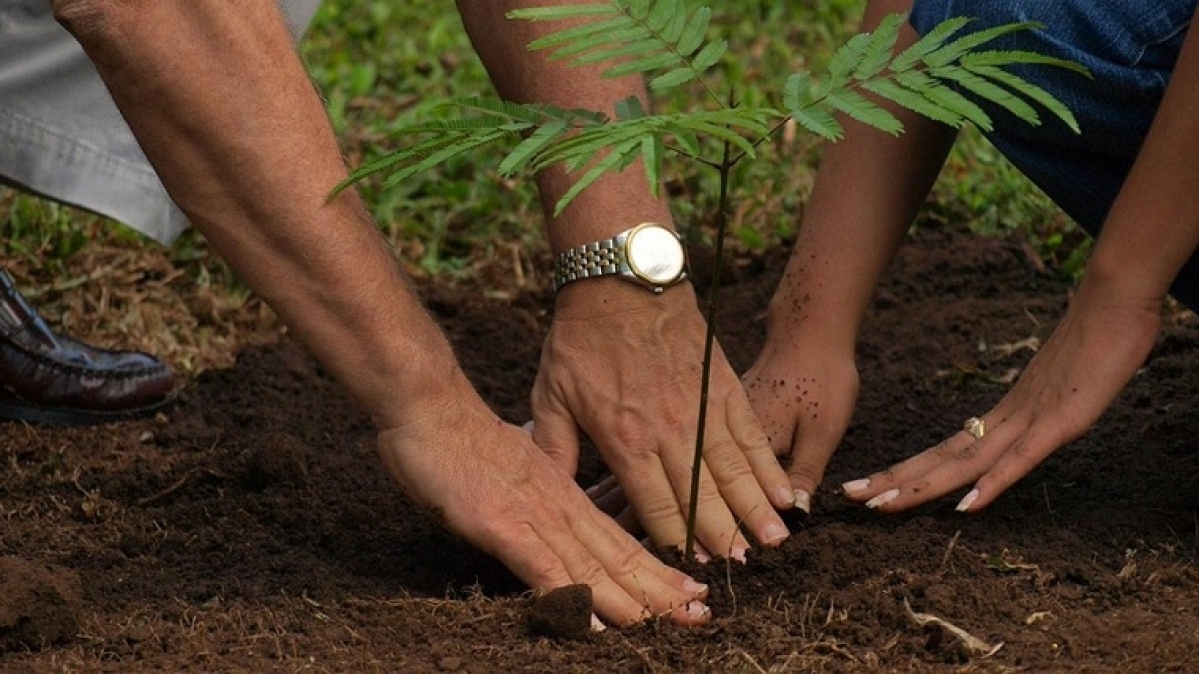 Mumbai: BMC teams up with citizens for mass plantation drive in city