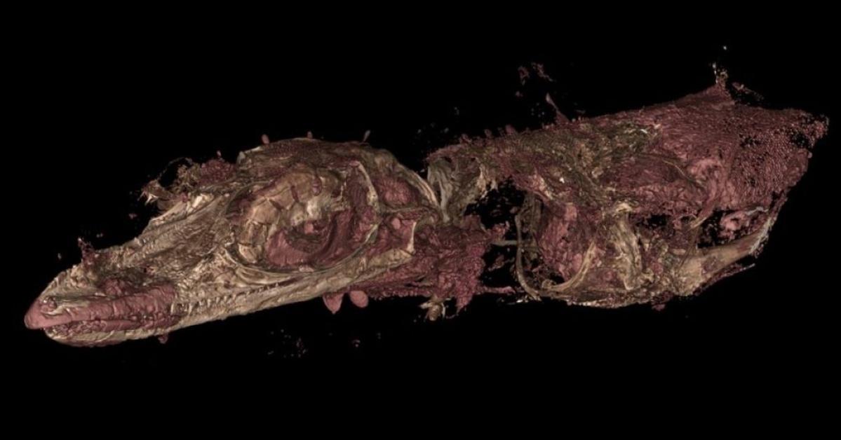 Researchers present new bizarre species of extinct lizard, previously misidentified as bird