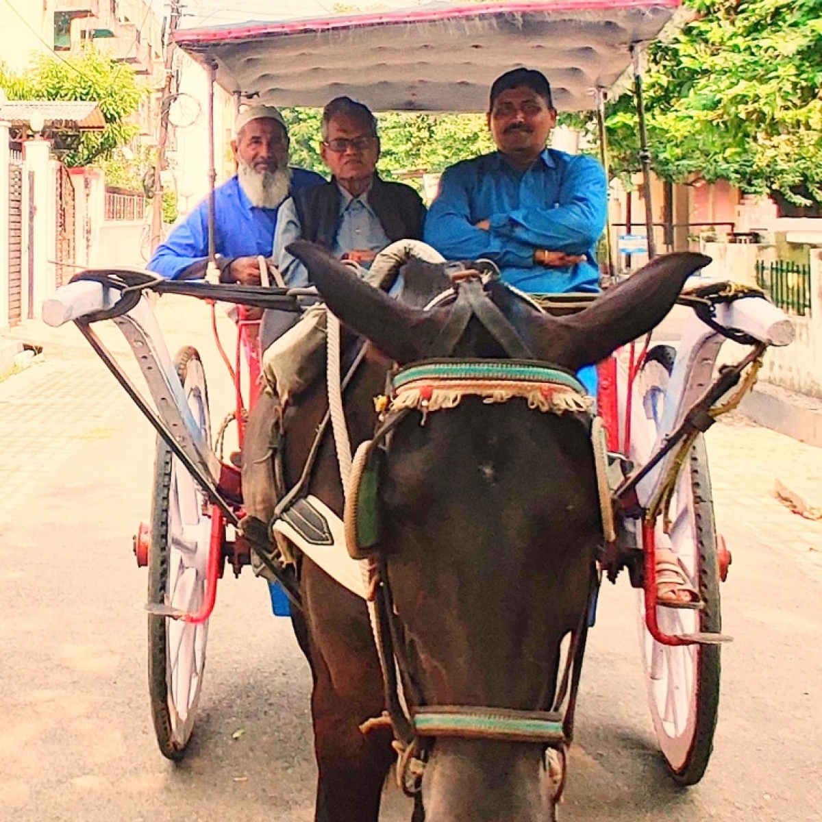 Reining in the tongas: Covid-19 lockdown puts the tongas off Lucknow's road