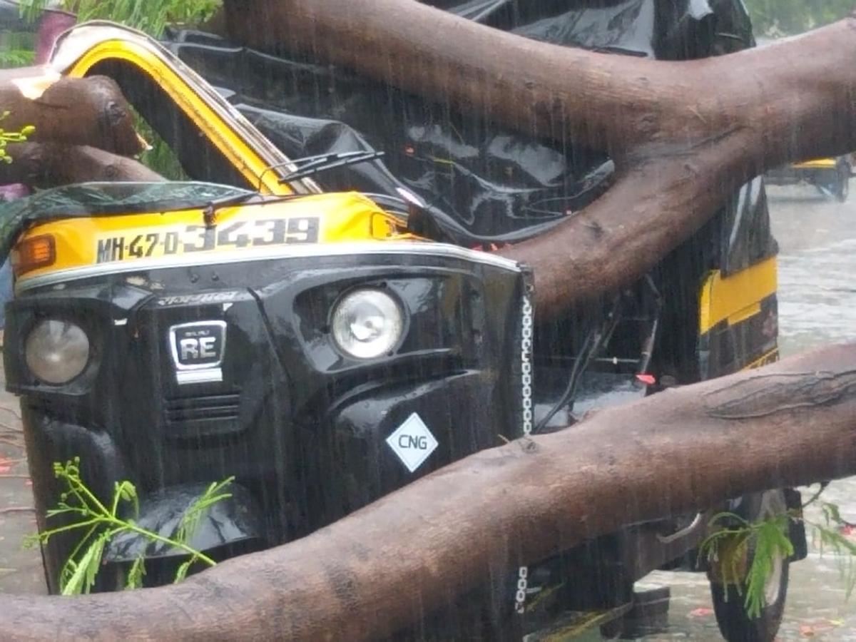 Mira Bhayandar: Auto-rickshaw driver has a narrow escape as tree comes crashing down during heavy rain