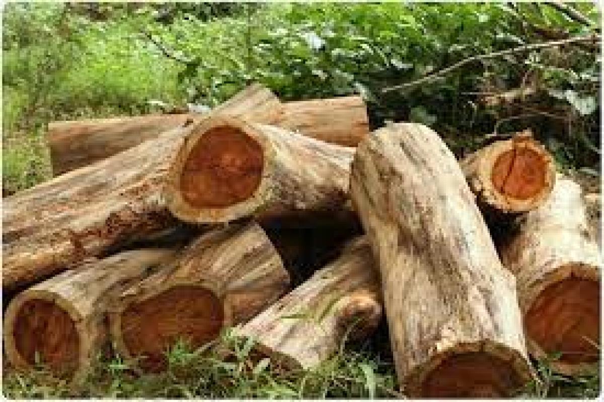 Kerala govt orders SIT probe into 'illegal' tree felling