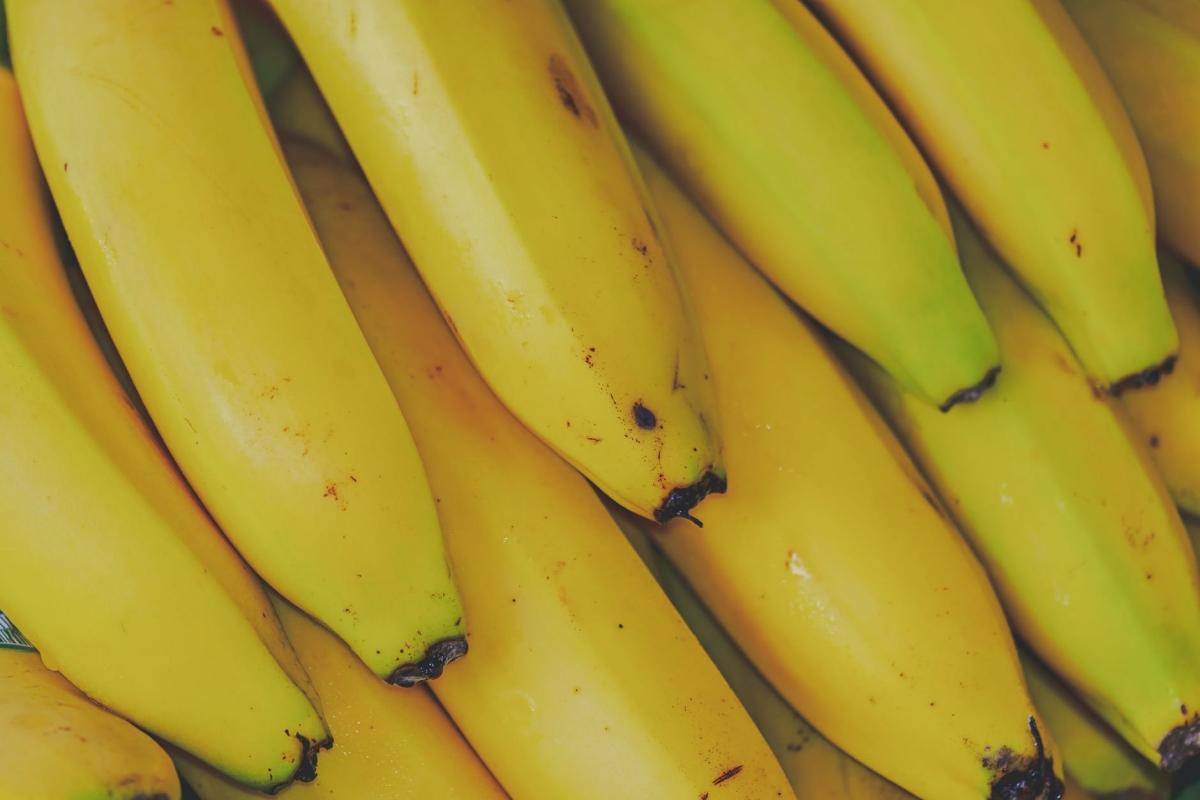 GI-certified Jalgaon banana exported to Dubai