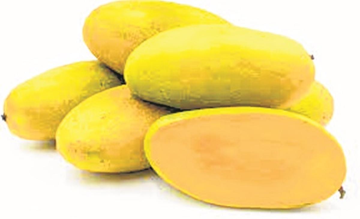 Aam baat: Mango traders upbeat over huge global orders despite pandemic bite!