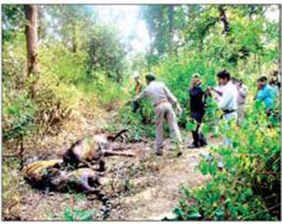 MPEB negligence leads to death of tigress in Badwara