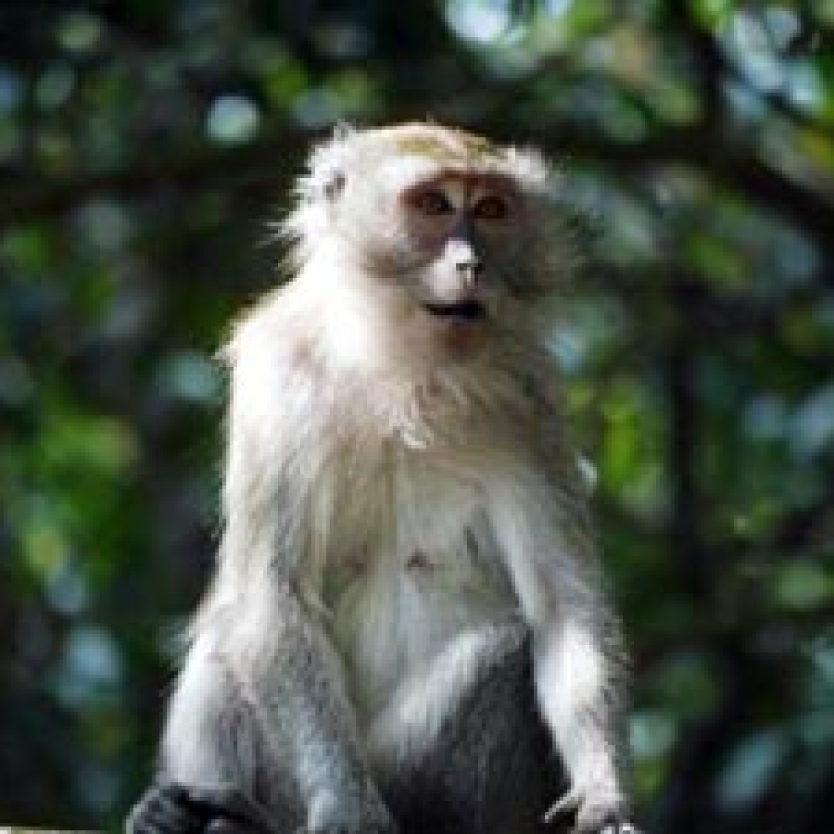 Thane: Monkey dies of electrocution in Wagle Estate area