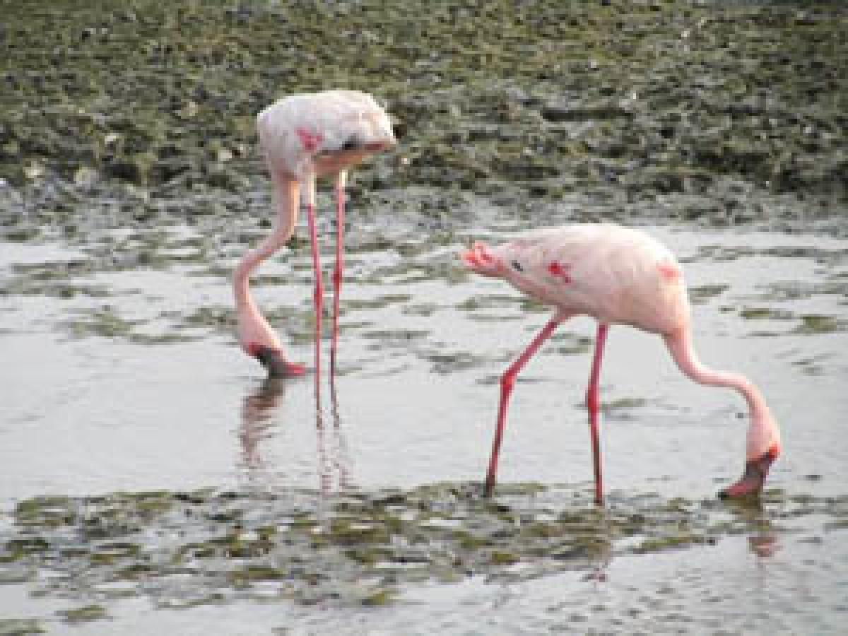 15 Indian bird species critically endangered