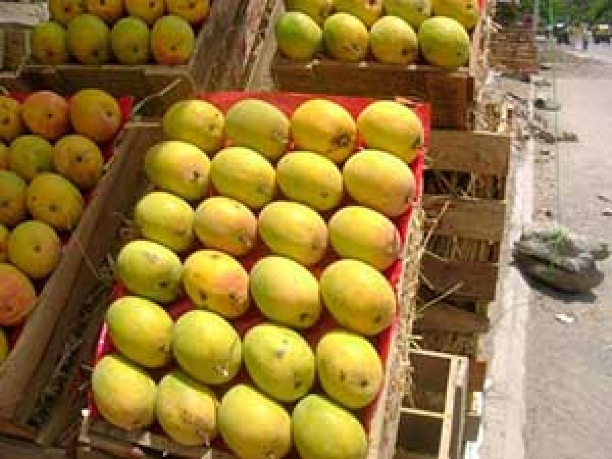 Navi Mumbai: Mango price dips due to strict COVID-19 curbs