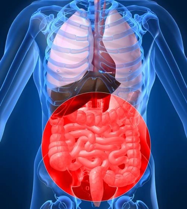 Findings link gut bacteria & fibromyalgia