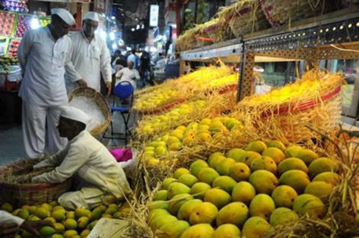 Australia to sell 'Kesar' variety of Indian mangoes for first time