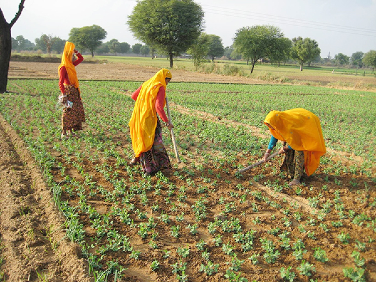 How will climate change affect livelihoods in South Asia?