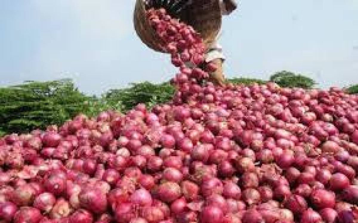 Ban on onions export
