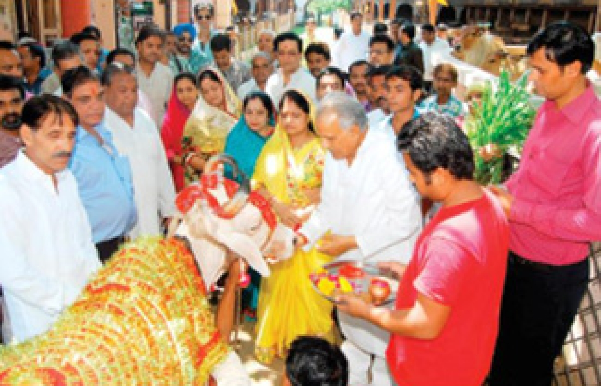 Gopal Gaushala sets example of caring of ailing cattle before society
