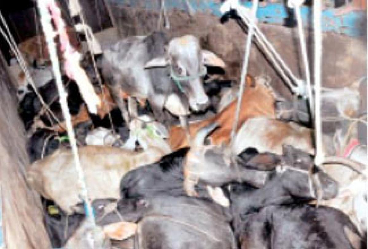 Bhopal: Not more than 100 killings per day at abattoir, BMC tells NGT