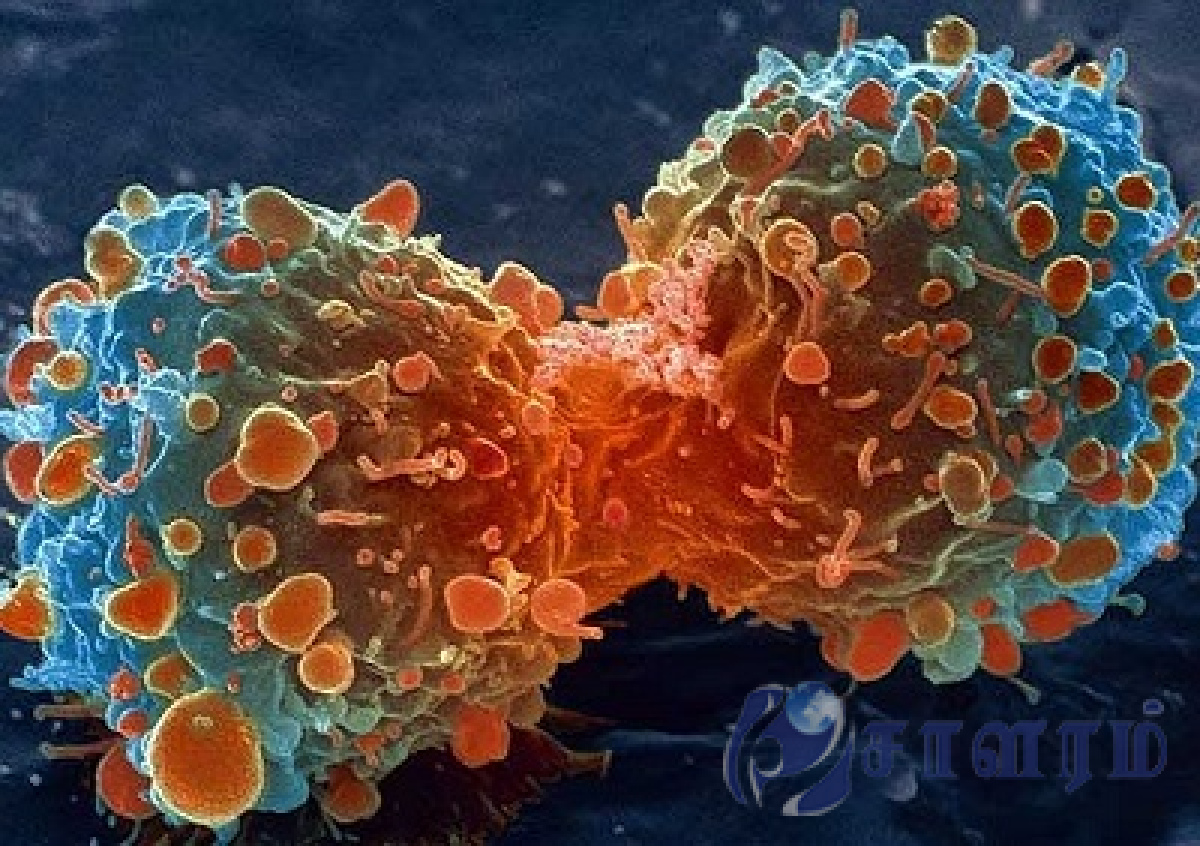 10 new antibodies found against cancer