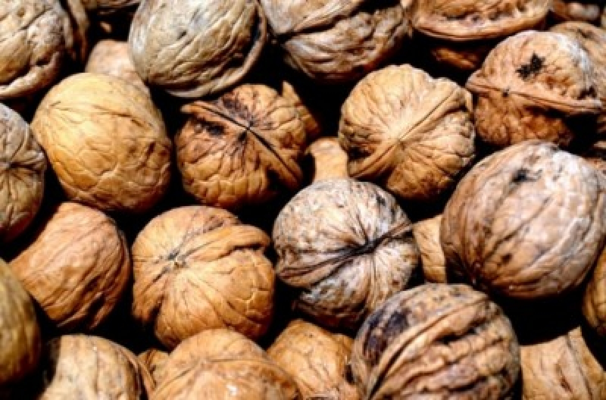 Eating walnuts daily may boost memory: Study