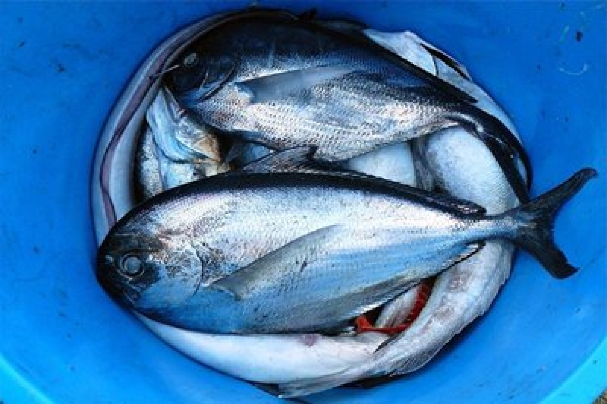 Have fish, soak up some sun for healthy brain
