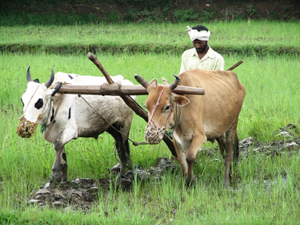 Maharashtra to announce relief package for farmers