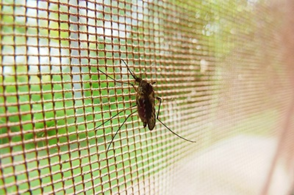 Novel 'honeytrap' to attract and sterilise male mosquitoes